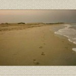Persian Gulf beach
