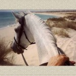 Horseback on Saudi beach