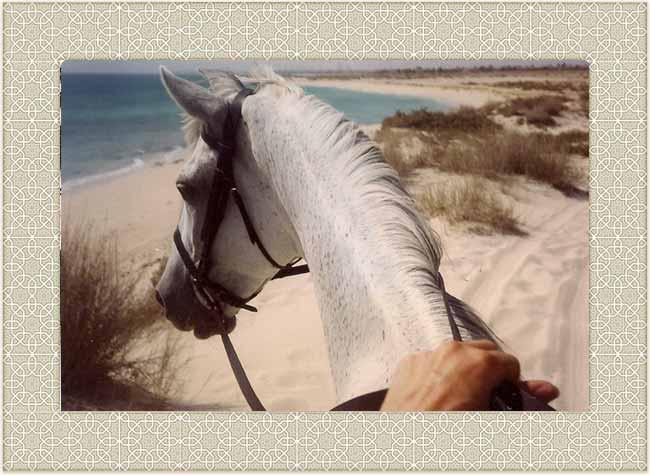 Horseback on Saudi beach